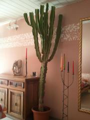 2x riesige Kaktusse (
