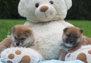 6 kleine Teddybären