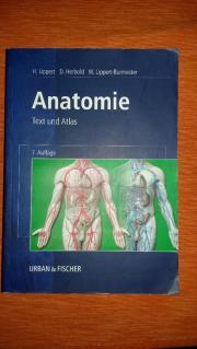 Anatomie Urban und