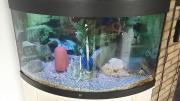 Aquarium 250 L