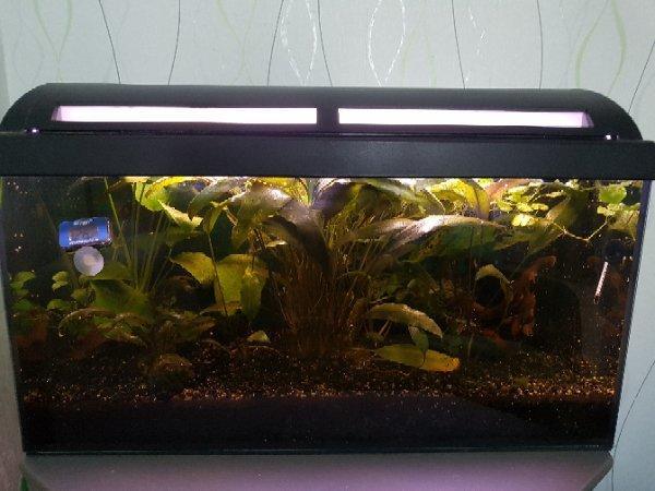 aquaristik in rastatt bei deinetierwelt. Black Bedroom Furniture Sets. Home Design Ideas