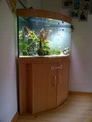 Aquarium, Eckaquarium Trigon