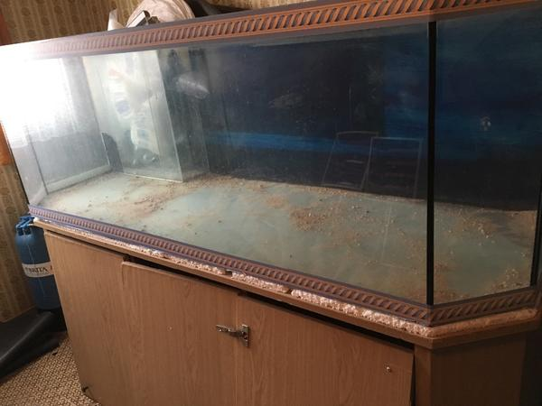 Aquarium biofilter neu und gebraucht kaufen bei for Aquarium gebraucht
