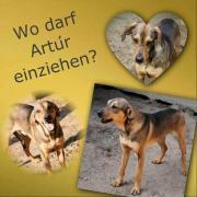 Artur gibt sich