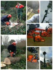 Baumfällung gegen Stammholz