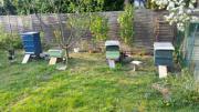 Bienenvölker Carnica Bienenvölker