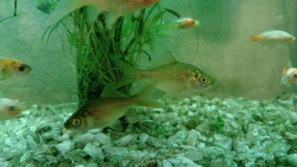 Gartenteich kaufen gartenteich gebraucht for Fischfutter goldfische teich