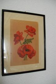 Bild Mohnblumen (Wasserfarben)