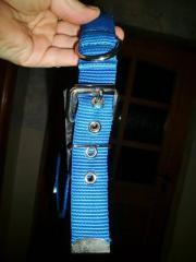 Blaues nwtg Halsband mit ausziehbarer