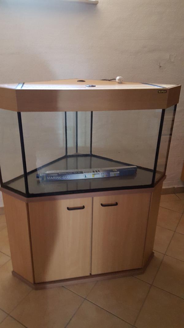 eckaquarium kaufen eckaquarium gebraucht. Black Bedroom Furniture Sets. Home Design Ideas