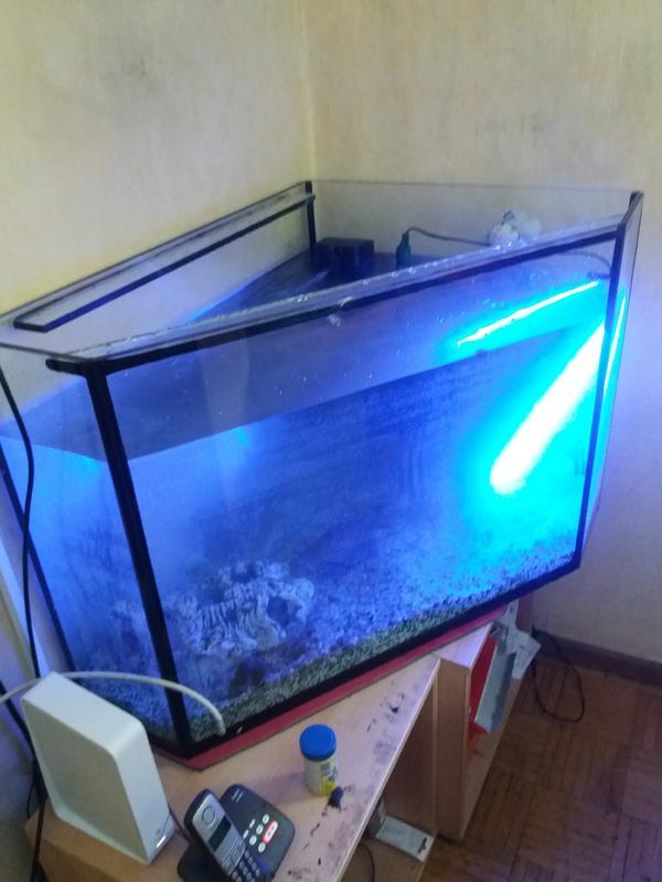 Eck aquarium kaufen eck aquarium gebraucht for Aquarium gebraucht