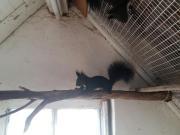 Eichhörnchen abzugeben
