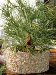 Gabionenpflanzkübel