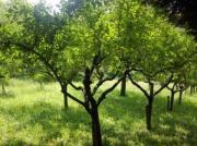 Garten In Brackenheim-