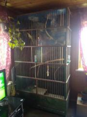 Großer selbstgebauter Vogelkäfig