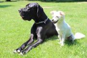 Haushälterin und Hundessitterin gesucht