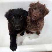 Hunde aus Moskau
