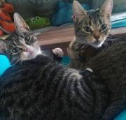 Junge Katzen Schwestern
