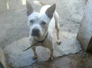 Junghund Medox, aus