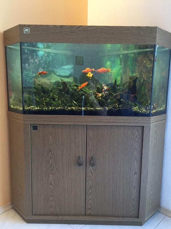 toller lochstein xxl f r aquarium stuttgart aquaristik. Black Bedroom Furniture Sets. Home Design Ideas