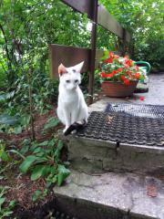 Katze Flockie sucht