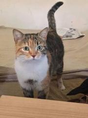 Katze Kätzchen Kitten