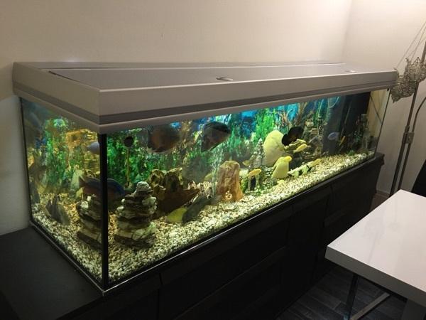 Einzigartig Komplettes Aquarium mit Unterschrank und (München) - Aquaristik  DU72