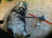 liebevolle Katzenbetreuung von
