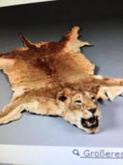 Löwenfell bzw. Tigerfell