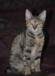 Maddi - zuckersüßes Katzenmädchen