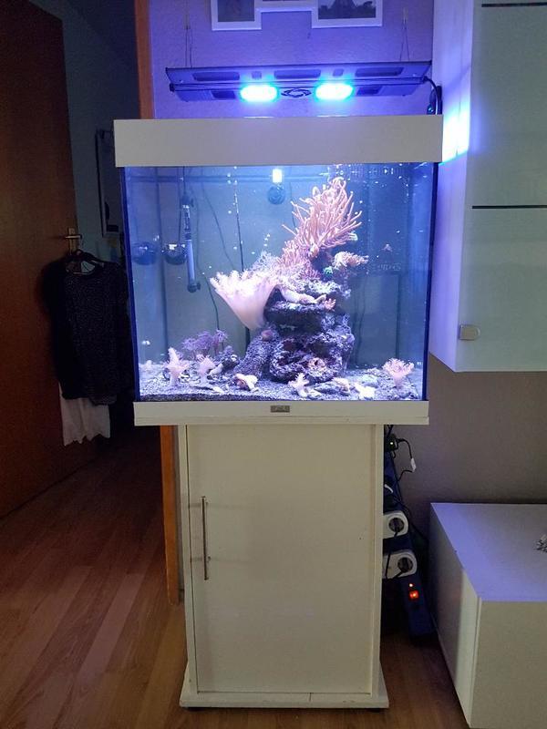 meerwasseraquarium juwel lido 120 kpl mit besatz und. Black Bedroom Furniture Sets. Home Design Ideas