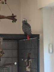 Partnervogel gesucht