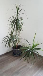 stachellose brombeere pflanzen in l tzelbach kaufen und verkaufen ber private kleinanzeigen. Black Bedroom Furniture Sets. Home Design Ideas