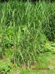 Pflanzen günstig von