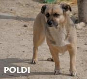 Poldi - wer gibt