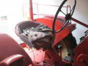 Porsche Traktor Diesel