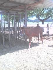 Reitbeteiligungen auf Ponys