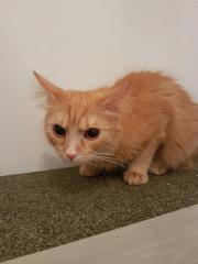 rote Katze 1