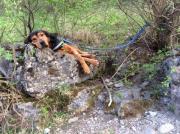Rottweiler Mischling Rocky