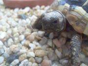 Schildkrötenbabys & Schildkrötenbücher