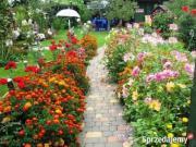 suche Garten / Freizeitgrundstück