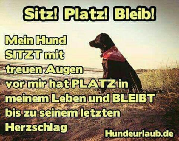 suchen Rotti - Cham - Hallo wir duchen einen jungen Rotti oder auch einen Erwachsenen. müsste man dann entscheiden beim sehen und je nach Gehorsam. ich bin infomiert über die Auflagen die in Bayern gelten für so genannte Listenhunde der kat. 2. vorläufiges negativ Z - Cham