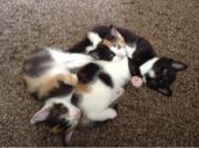 süße Katzenbabys in