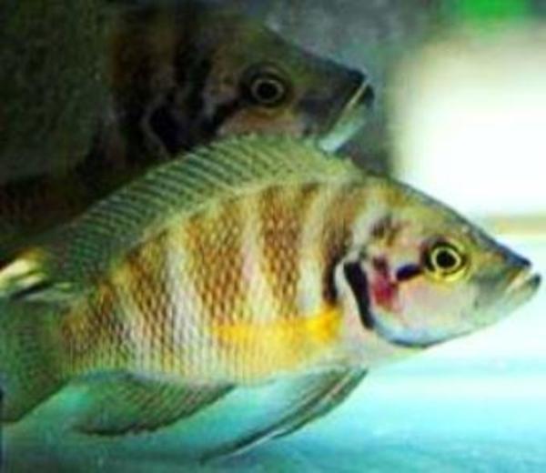Aquaristik in erlenbach kreis heilbronn neckar bei for Zierfisch versand
