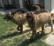 Tessa & Teddy suchen