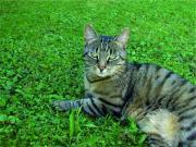 Tiger-Katze Lilly