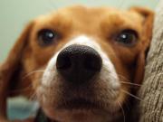 Traumafachberater f. Hunde
