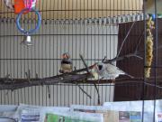 Vogel Kaufen München