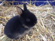 Zutrauliche Zwergmix-Kaninchen