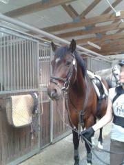 Zuverlässiges Pferdemädchen sucht